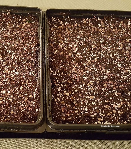 seed-starting-mix-with-seed