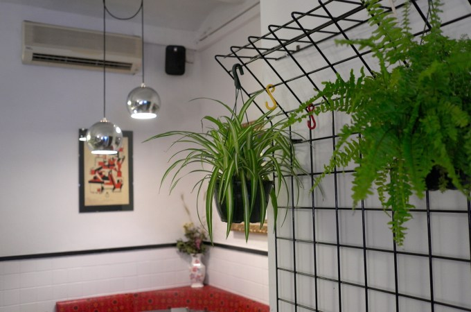 Hanging plants at Sate