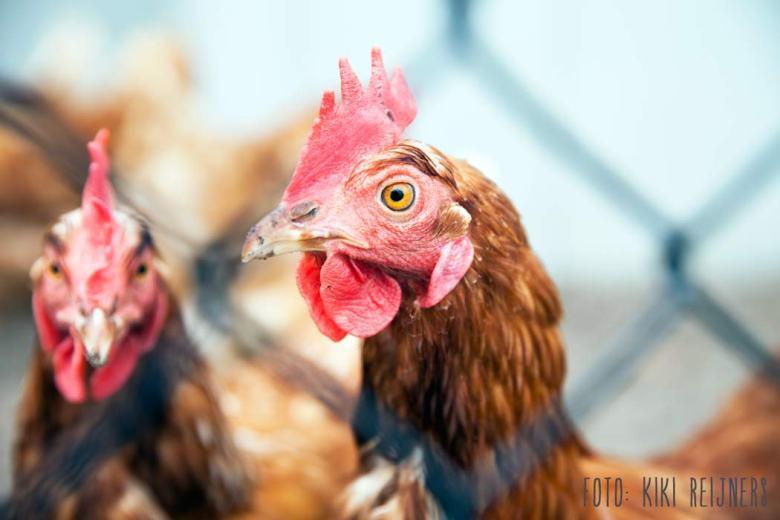 Rondeel kippen Miss Foodie biologisch altijd beter