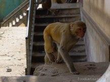 One of the many monkeys in Mt. Popa