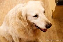 Bau House: Ssong (Labrador)