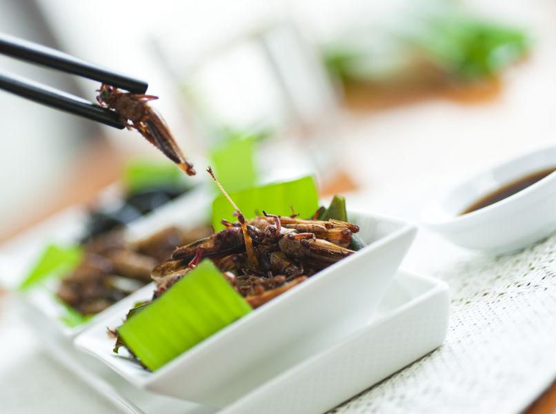 Restaurants mit Insekten