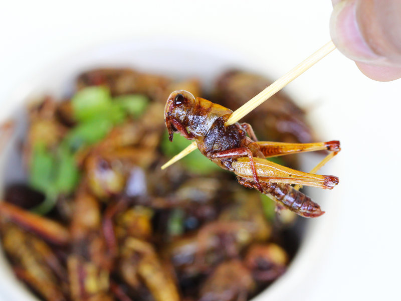 Food Events Insekten