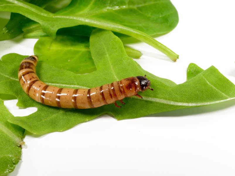 Insekten kaufen, sammeln oder züchten