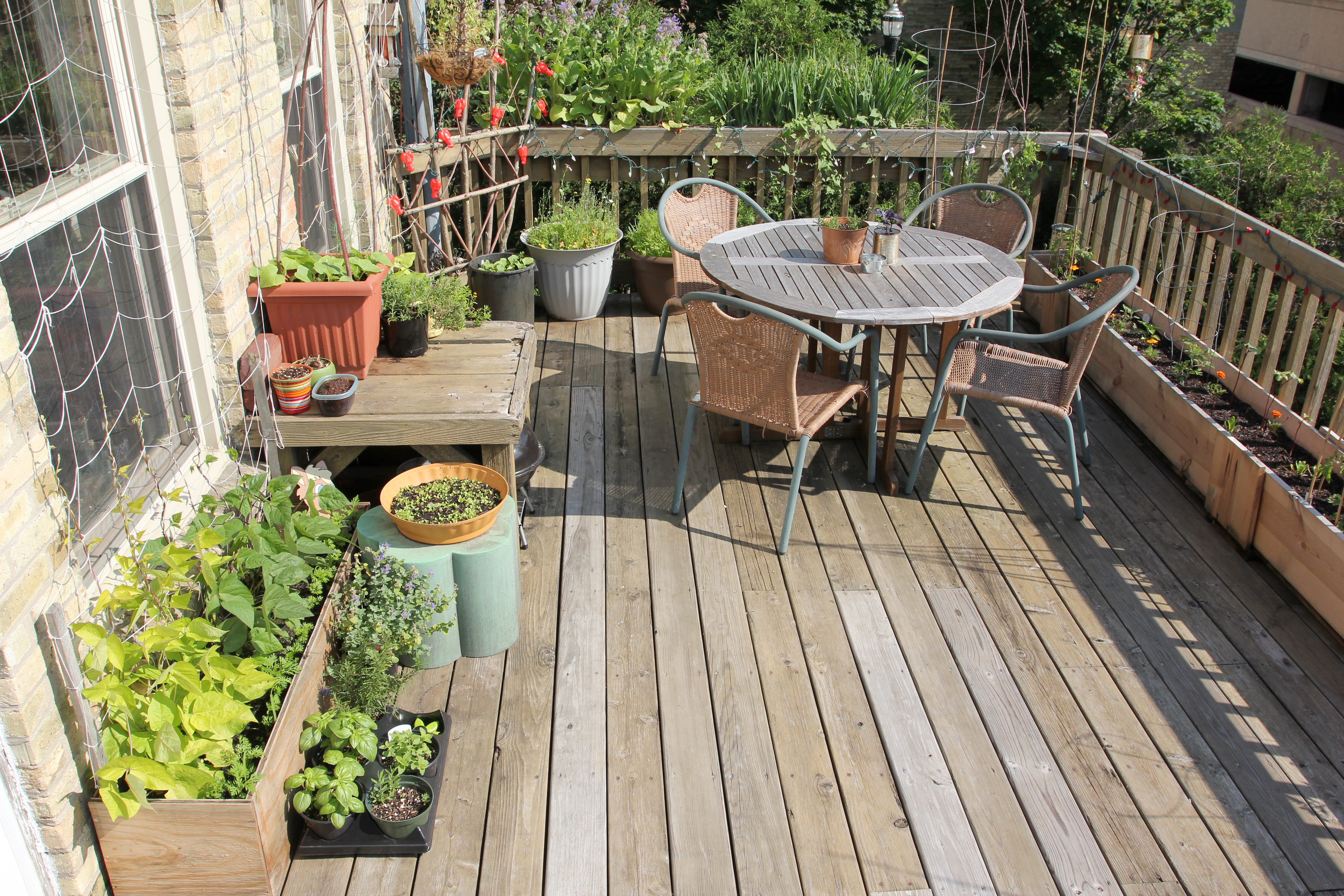 5 things I learned while planting my patio garden     Food Less Traveled My patio garden