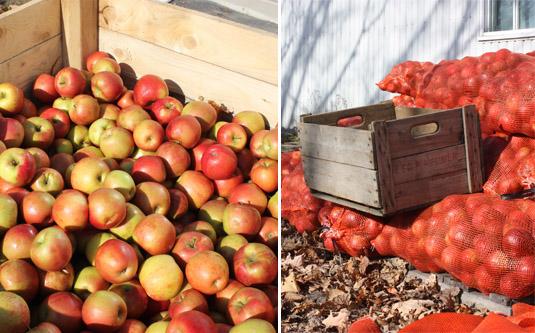 Apples from l'Île d'Orléans