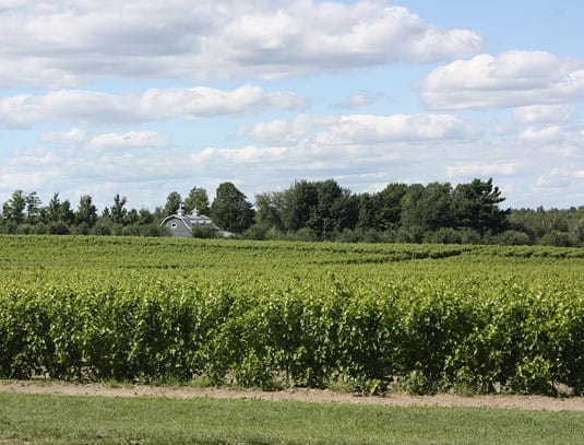 A post I feel didn't get the attention it deserved: Roadtrip to the Eastern Townships: Wine and Cider Tastings