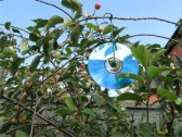 CD's in branches of cherry tree