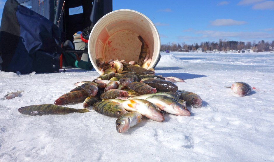 Ice Fishing - Yellow Perch