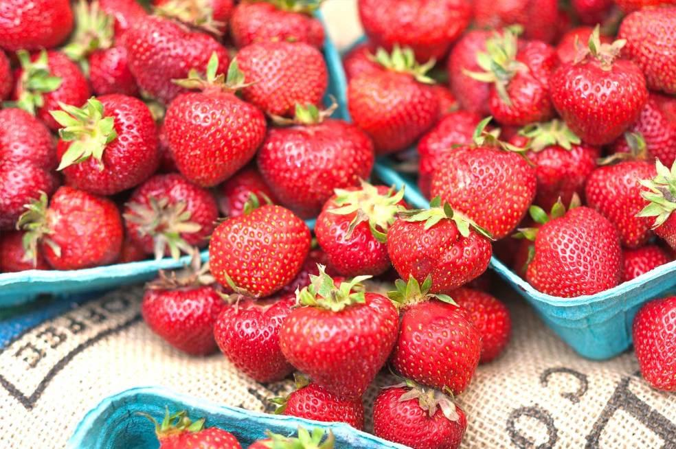 the-local-farm-market-photoshoot-3