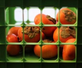 persimmons