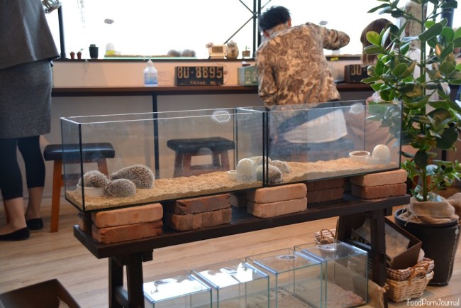 Harry Hedgehog Cafe Tokyo hedgehogs