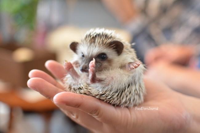 Harry Hedgehog Tokyo cute