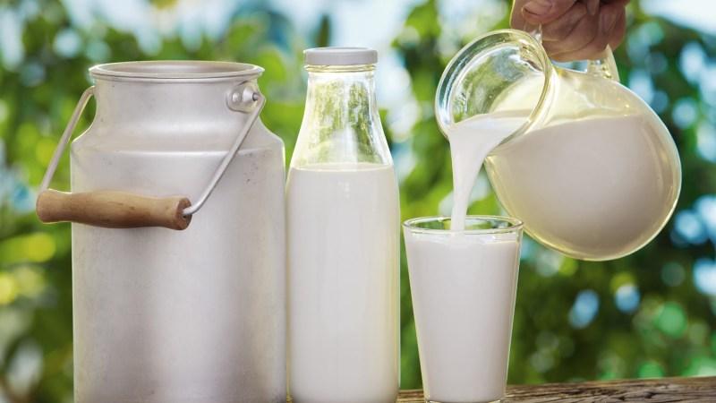 harmful microorganisms found in milk