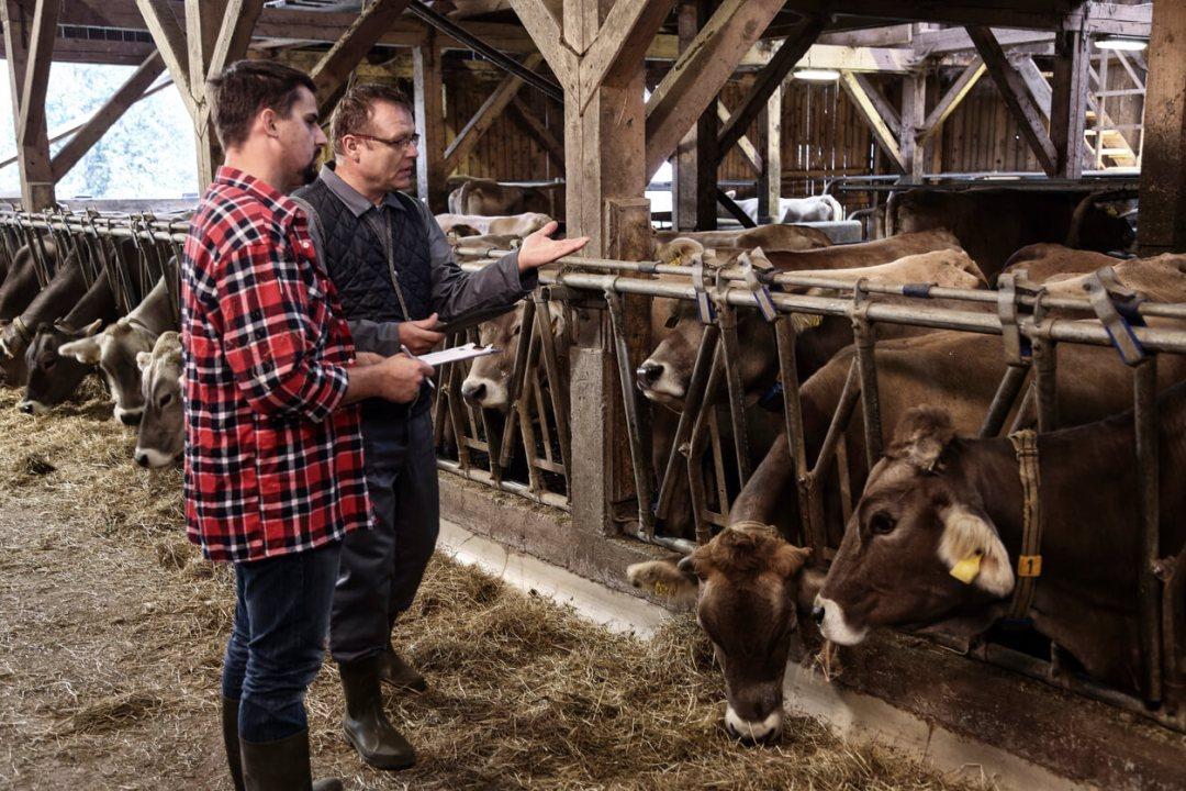 奶牛的再生農業實踐