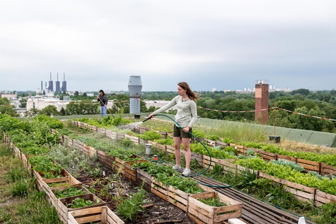 女人給城市美食花園澆水