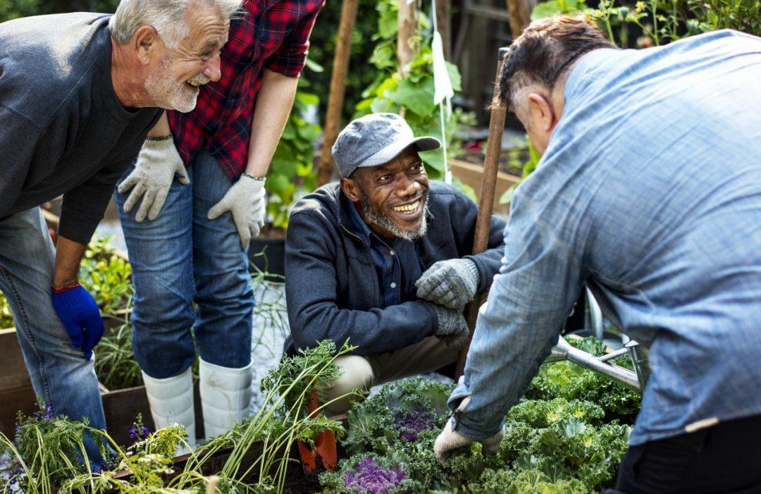 人們在溫室種植蔬菜