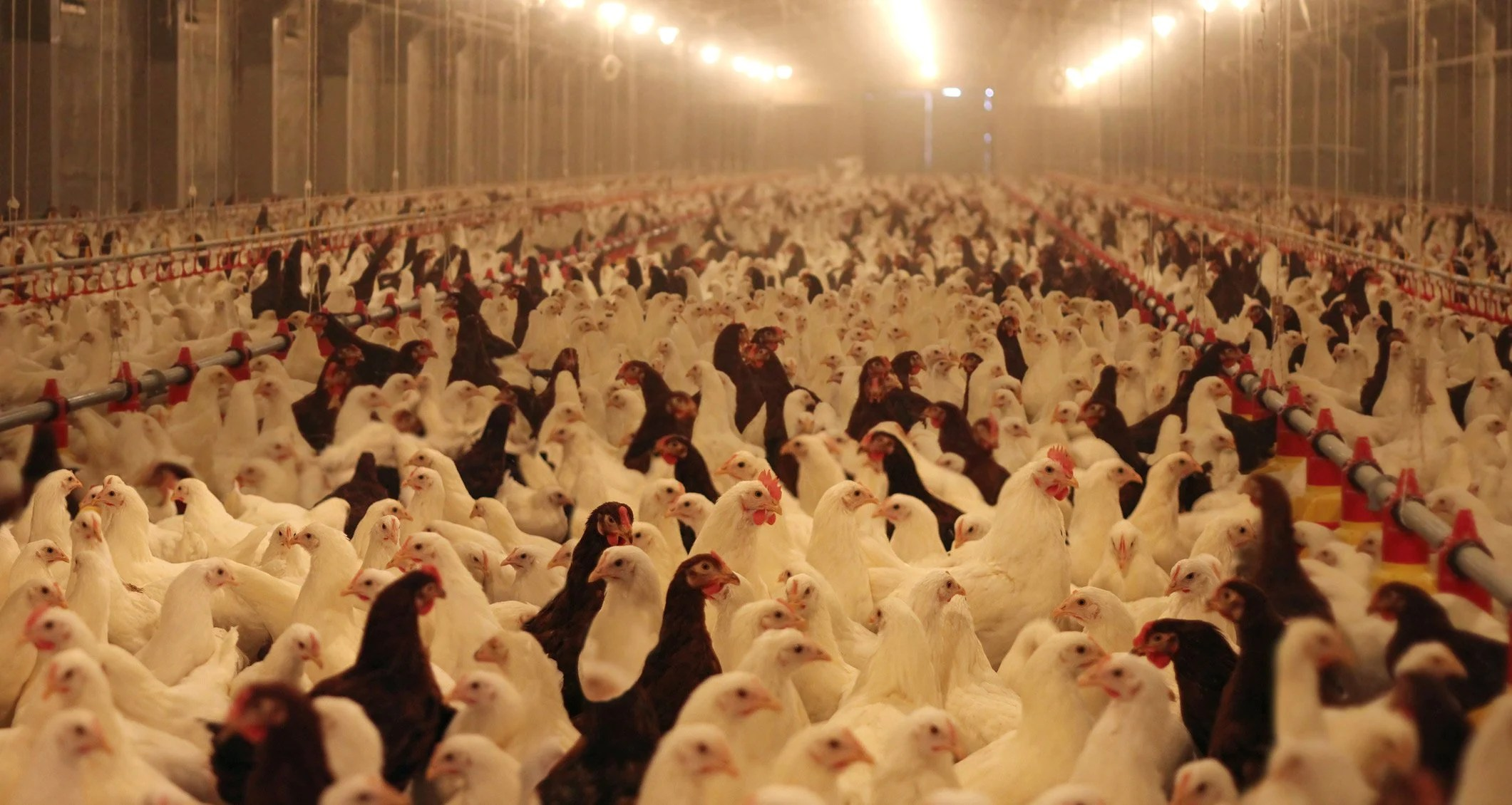 The Surprising Truth About Antibiotic Resistance Amp Factory