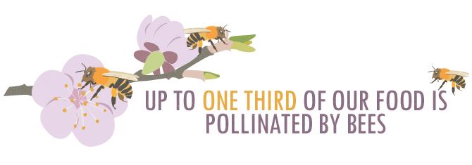 多達三分之二的食物被蜜蜂授粉