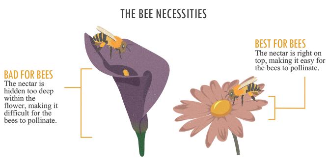 蜜蜂的必需品