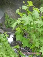 wahkeena falls 08