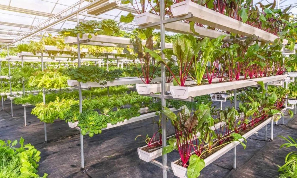 Urban farming is essential for economic, environmental, and regional stability as the world's population is moving increasingly into its cities.