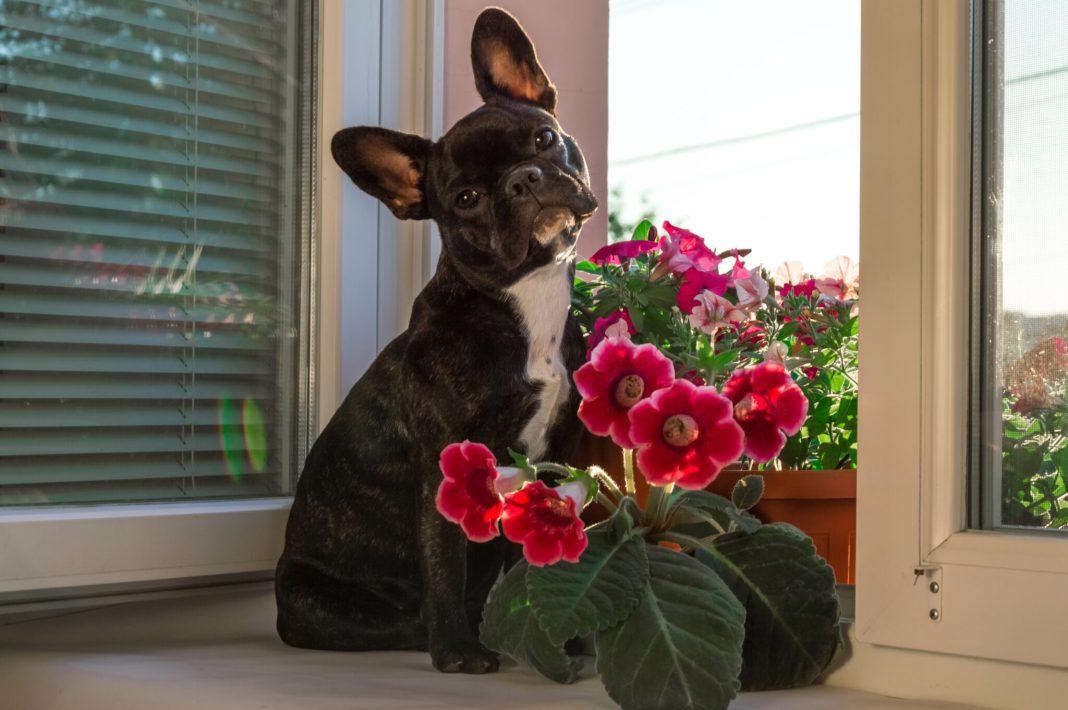 toxic plants to dog