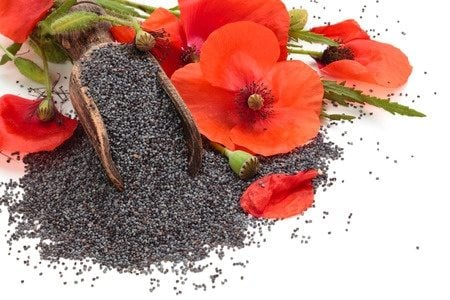 Poppy Seeds  England    Buy Poppy Seeds  England  in Bulk from Food     Poppy flowers and poppy seeds