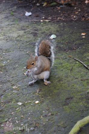 Hello squirrel!