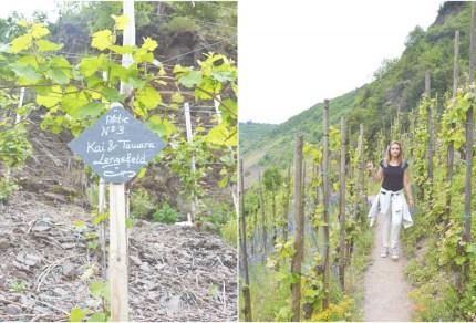 Duitsland: Alles over Riesling wijnen