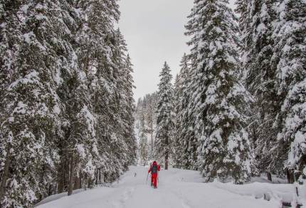 Eens iets anders dan skiën? Ga sneeuwschoenwandelen in Oostenrijk!