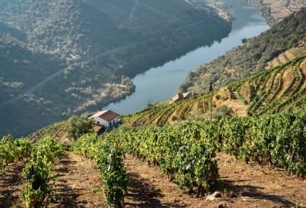 Wat is port? Alles over deze bijzonder wijn uit Portugal