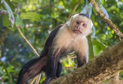 Road trip Costa Rica - de ultieme rondreis voor 3/4 weken