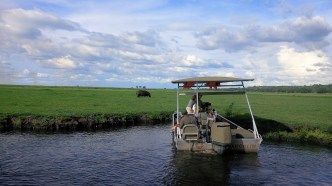 chobe-river-04-hippo-18