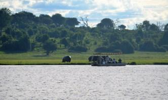 chobe-river-04-hippo-19