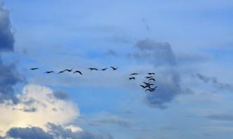chobe-river-05-bird-9