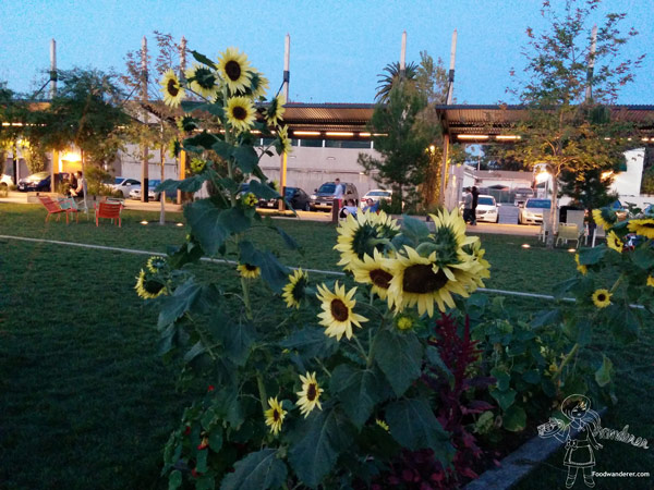 Sunflowers at the small park next to Anaheim Packing house and Anaheim Brewing