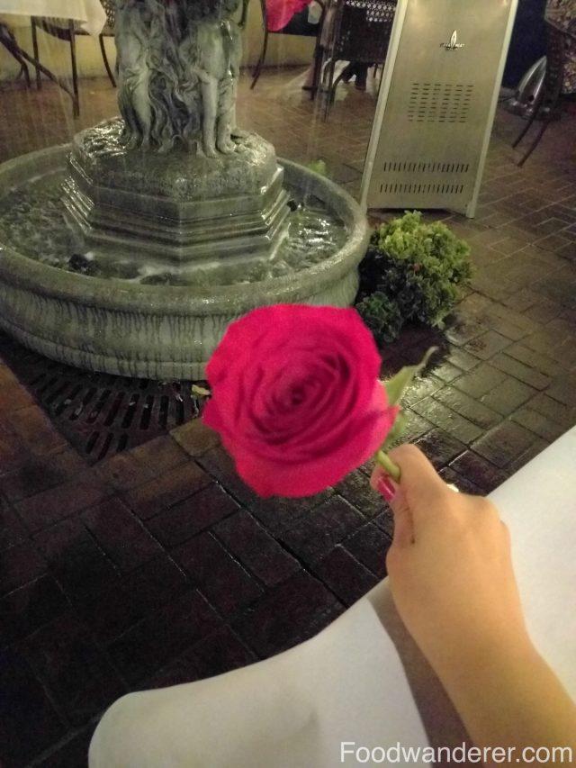 Greek Valentine's Day Rose