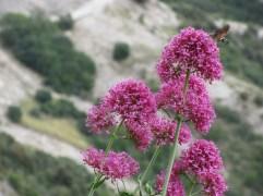 Pops of Pink Attract Wildlife