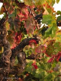 Old vine Zinfandel.