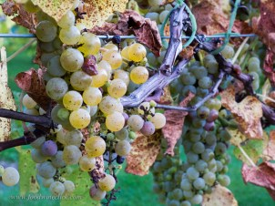four_daughters_winery_20140926_23