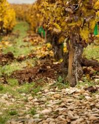 "Grand Cru ""Soil"" in Batard-Montrachet"