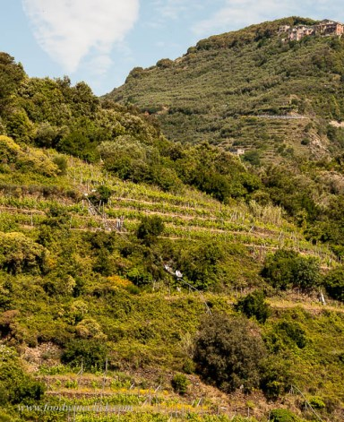 Mini-railways are the only way to get around the steep, terraced vineyards