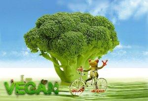 vegan. quillaia