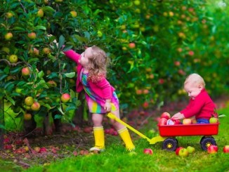 Children picking apples on a farm. little girl and boy play in apple tree orchard. kids pick fruit in autumn with a wheel barrow. toddler and baby eat fruits at fall harvest. outdoor fun for children