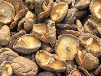 Dried mushroom in a market, closeup of photo. Scource of L-ergothioneine