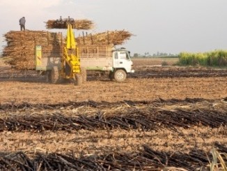 A tractor taking sugar cane and placing it on a vehicle with other sugar cane.