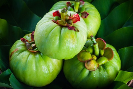 39207683 - still life with fresh garcinia cambogia on wooden background. garcinia is thai herb (south of thailand) and sour flavor lots of vitamin c. low key picture style.closeup
