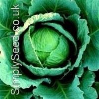 cabbage-tundra (photo)