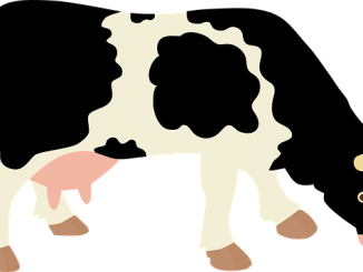 Pictogram of a cow illustrating full-fat dairy production.